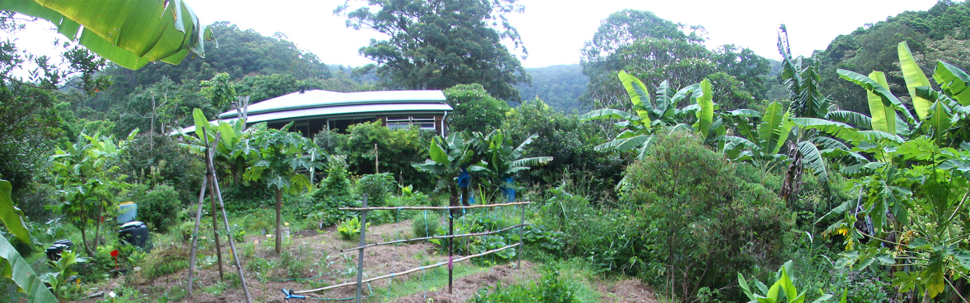 Permaculture Sunshine Coast - Noosa Forest Retreat