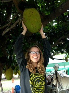 Organic jack fruit harvest