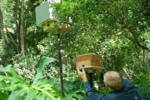 Native Bee Hive Permaculture Course Queensland